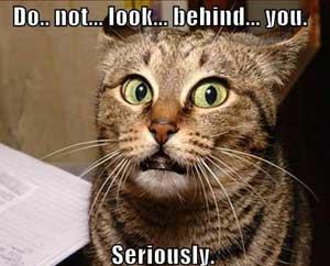 cat-funny.jpg